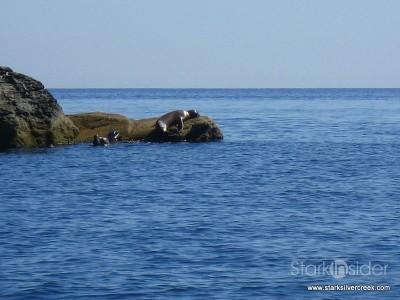 Loreto Coronado Island Trip-10