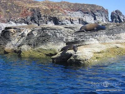 Loreto Coronado Island Trip-11