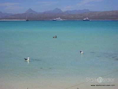 Loreto Coronado Island Trip-14