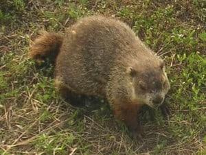 doggroundhog-small