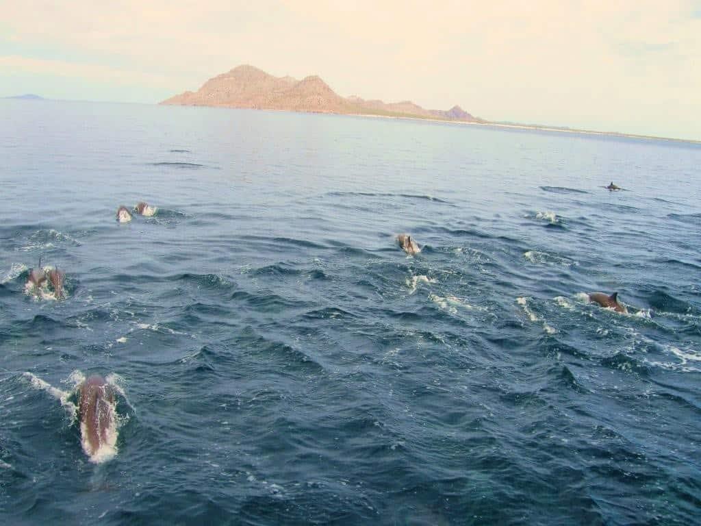 escorting-the-el-don-to-isla-carmen