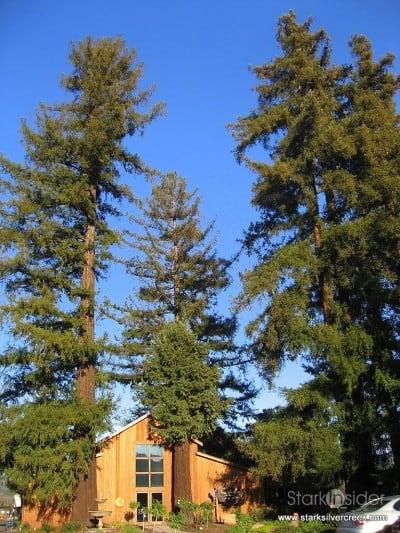 sequoia-grove-winery-napa-2