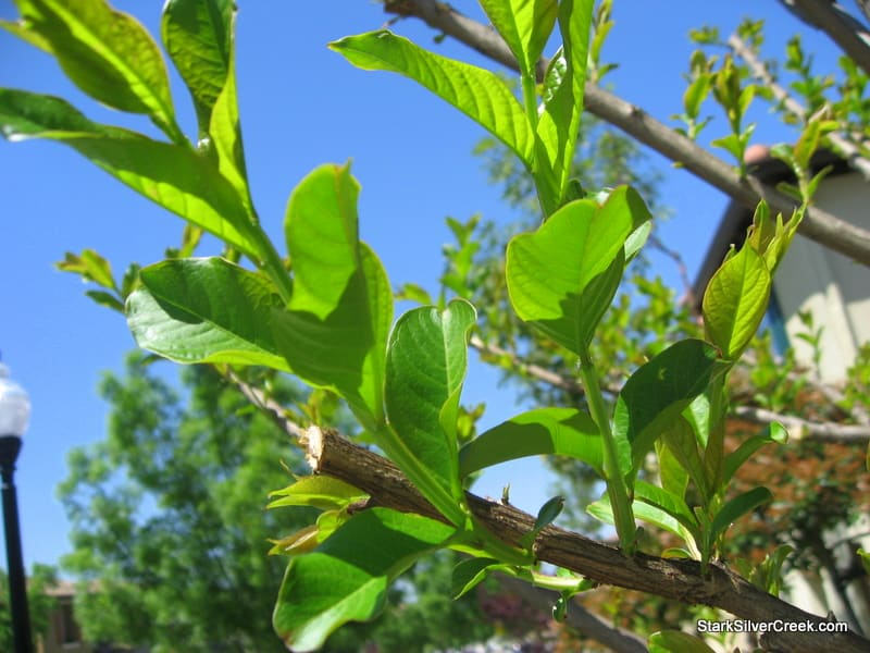 clint-tim-burton-tree-comes-to-life-1