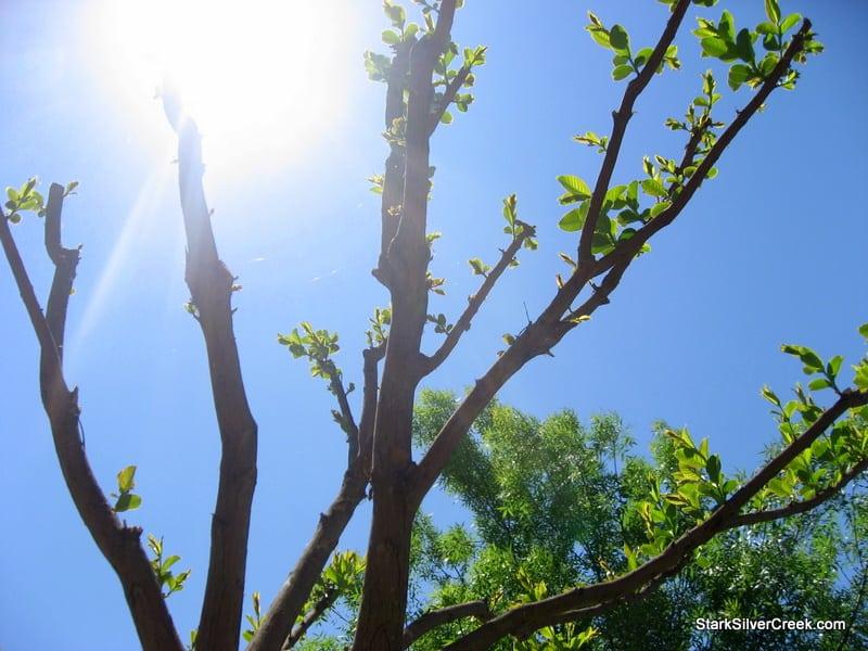 clint-tim-burton-tree-comes-to-life