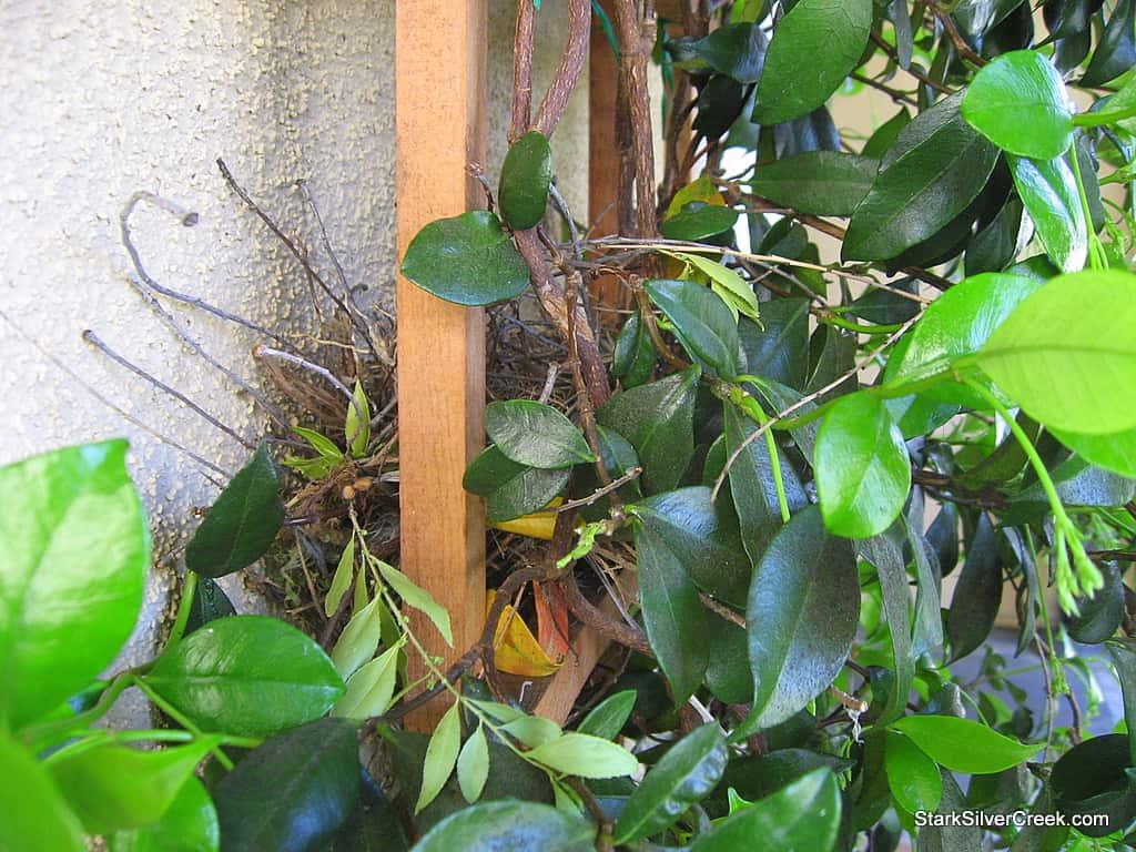 spring_bird_egg