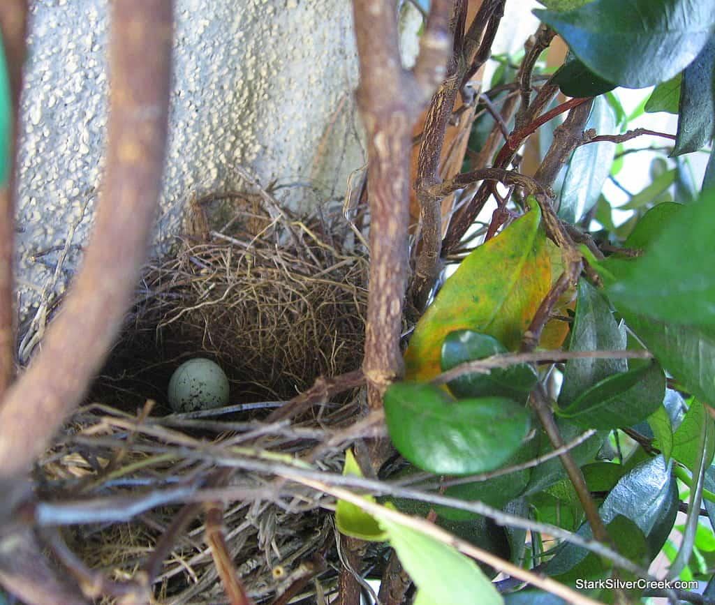 spring_bird_egg_2