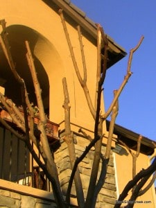 tim-burton-tree