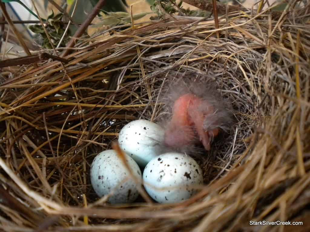 baby-bird-in-nest-1