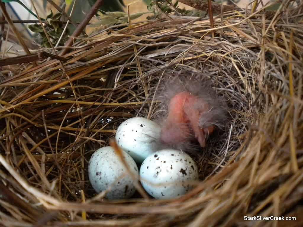 baby-bird-in-nest-1