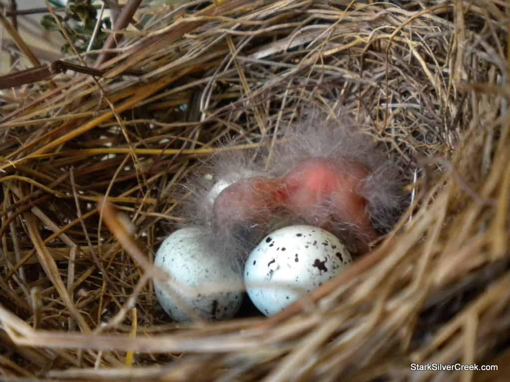 baby-bird-in-nest-2