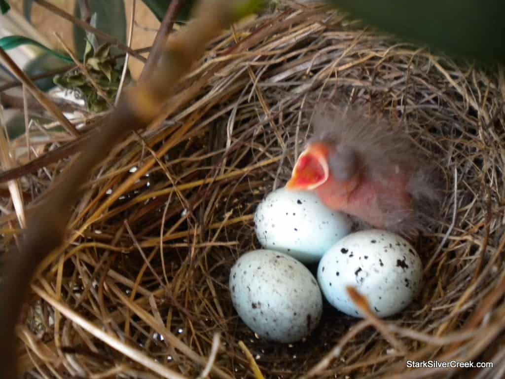 baby-bird-in-nest-3