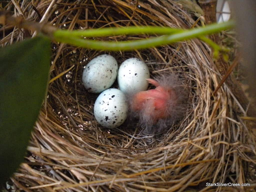 baby-bird-in-nest