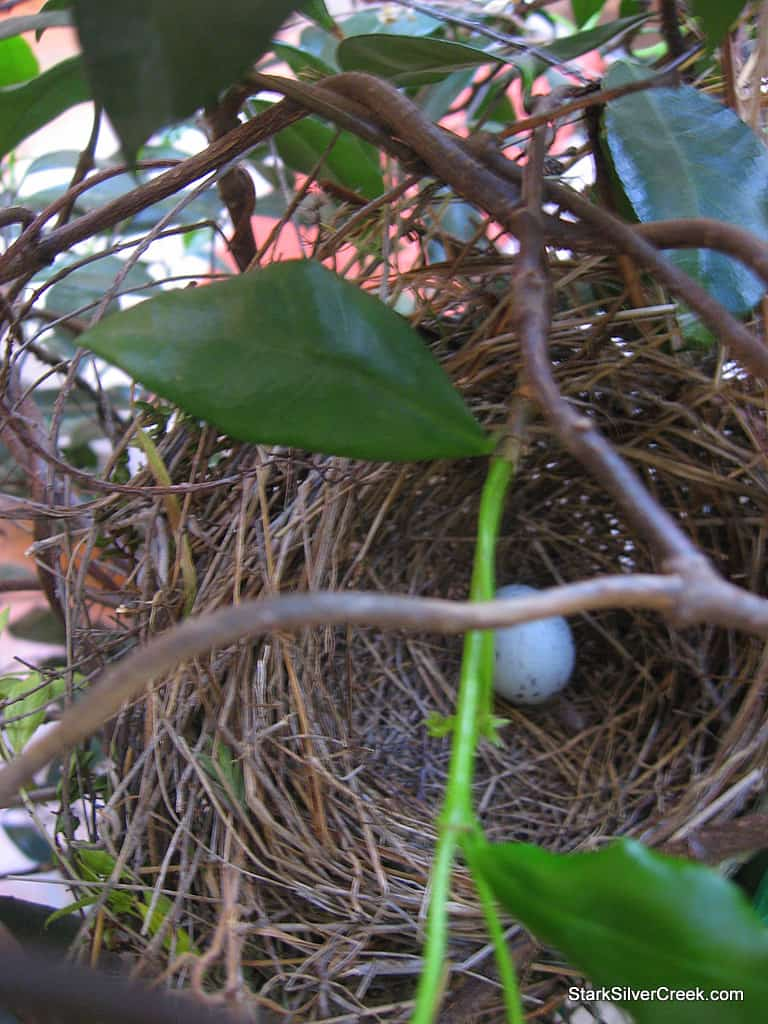 bird-nest-eggs-2