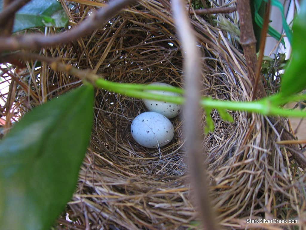 Another bird's nest, three eggs and a camera mishap | Stark Insider