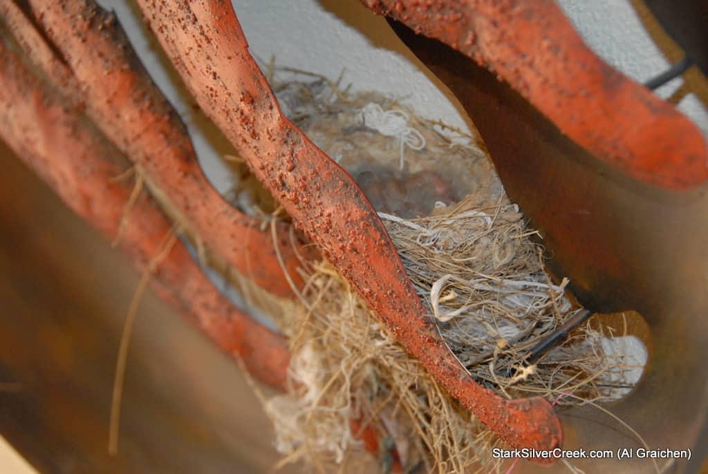 loreto-al-graichen-vultures-hummingbirds-baja-wildlife-1