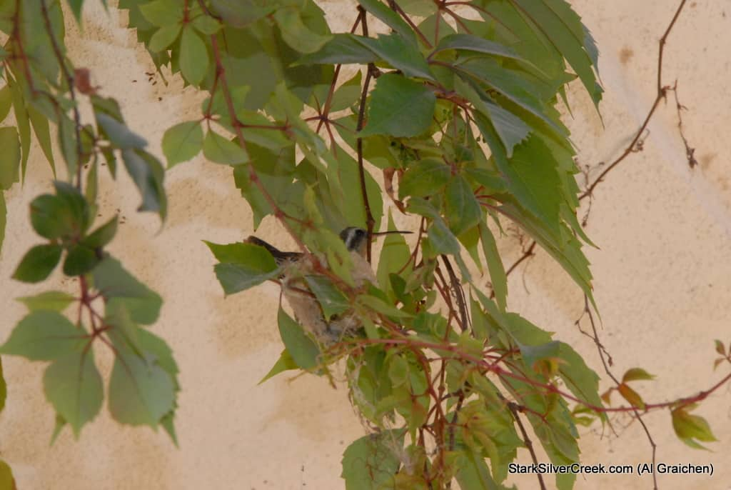 loreto-al-graichen-vultures-hummingbirds-baja-wildlife-2