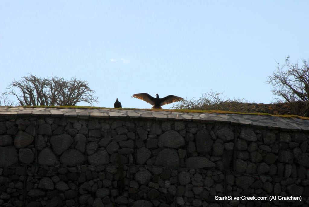 loreto-al-graichen-vultures-hummingbirds-baja-wildlife