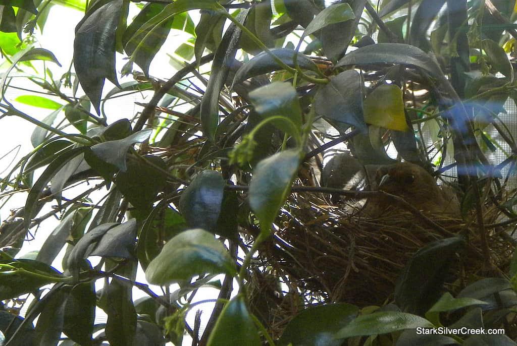 mystery-bird-in-nest