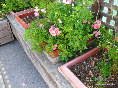 wente-vineyards-planter-boxes-1