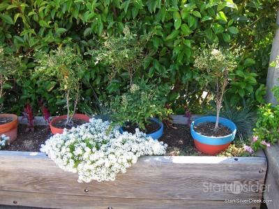 wente-vineyards-planter-boxes-2