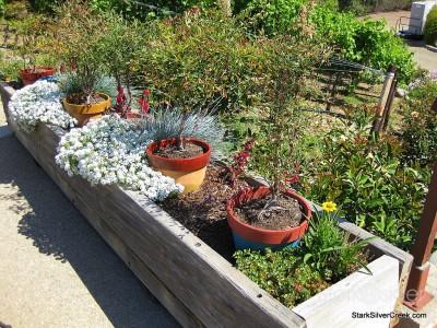 wente-vineyards-planter-boxes-3