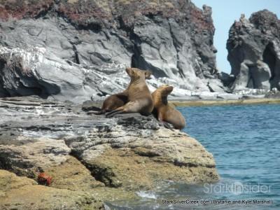 6-sea-lions-on-coronado-island