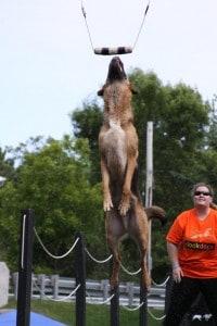 dockdogs-sheena