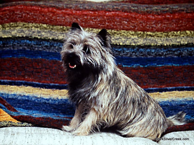 Hamish, a Cairn Terrier, our family dog back in the 80s in Ottawa, Canada. He would have loved all this dig talk on Twitter and Facebook!