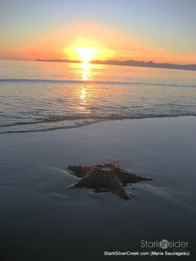 starfish-at-sunrise