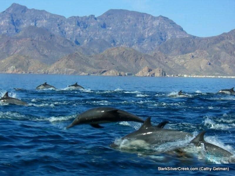 dolphins & Mtn