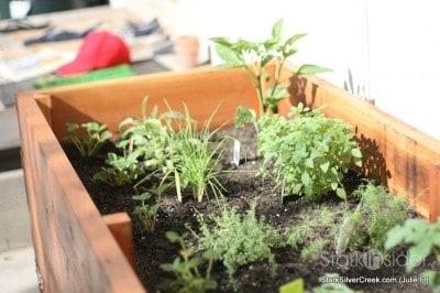 vegetable-planter-box-julie-f-1