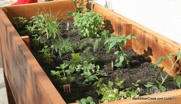 Vegetable Planter Box Turned Herb Garden Julie writes in
