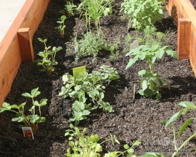vegetable-planter-box-julie-f-5