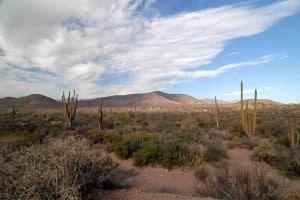 baja-desert