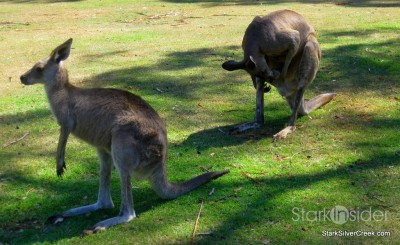 lone-pine-koala-sanctuary-australia-brisbane-10