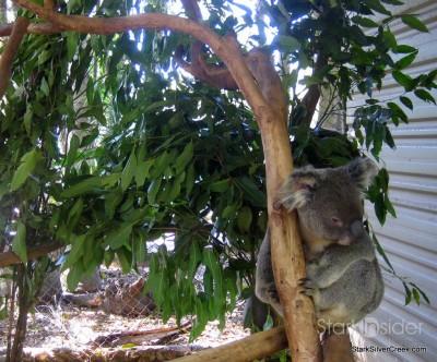 lone-pine-koala-sanctuary-australia-brisbane-12