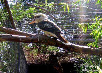 lone-pine-koala-sanctuary-australia-brisbane-15