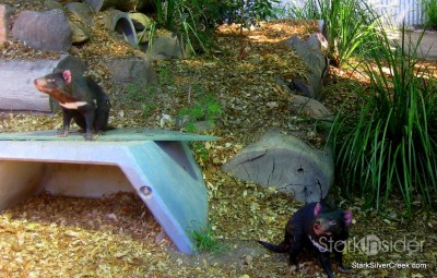 lone-pine-koala-sanctuary-australia-brisbane-17
