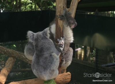 lone-pine-koala-sanctuary-australia-brisbane-2