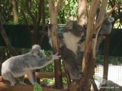 lone-pine-koala-sanctuary-australia-brisbane-3