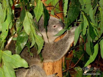 lone-pine-koala-sanctuary-australia-brisbane-31
