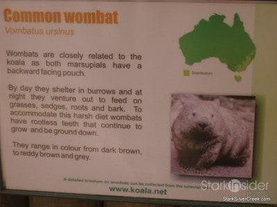 lone-pine-koala-sanctuary-australia-brisbane-34