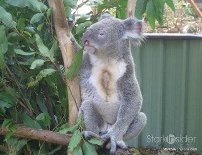 lone-pine-koala-sanctuary-australia-brisbane-35