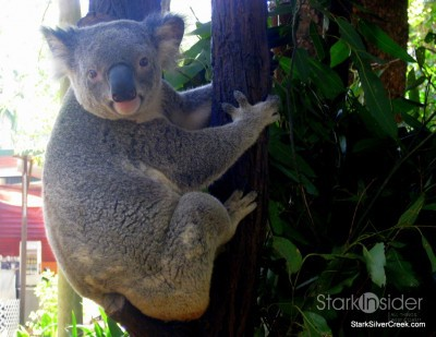 lone-pine-koala-sanctuary-australia-brisbane-38