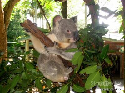 lone-pine-koala-sanctuary-australia-brisbane-39