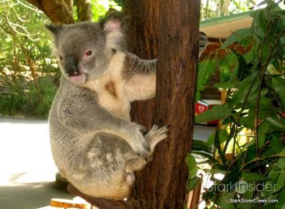 lone-pine-koala-sanctuary-australia-brisbane-40