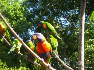 lone-pine-koala-sanctuary-australia-brisbane-49