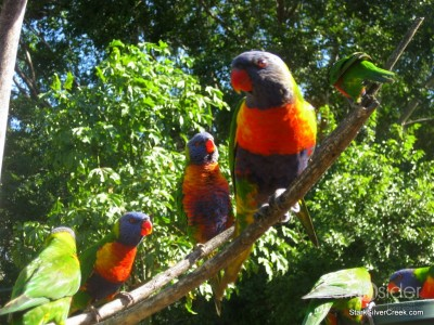 lone-pine-koala-sanctuary-australia-brisbane-50