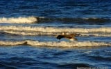loreto-bay-nature-wildlife-al-graichen-4