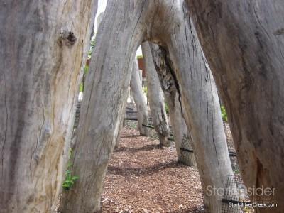 australian-botanical-gardens-28